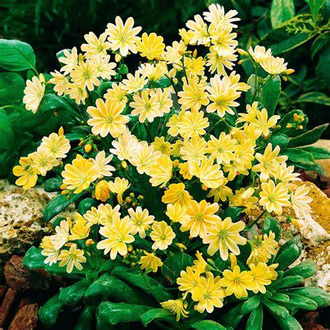 Blumen F R Schattige G Rten 997 by Pflanzen F 252 R Tr 246 Ge Pflanzen Und Tr Ge Balkonkasten Mit
