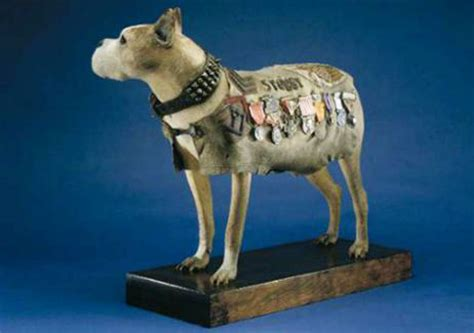 Sergeant Stubby Museum One Of Our Veterans