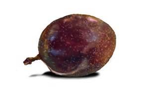 Best Flower Food passion fruit by emptypulchritude on deviantart