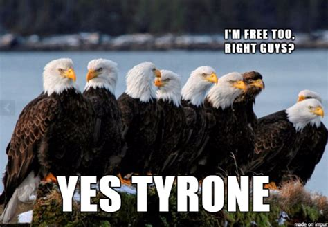 Funny Eagles Memes - murica eagle meme www imgkid com the image kid has it