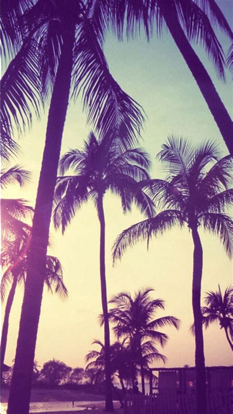 palm trees background palm trees sunset iphone wallpaper palm trees