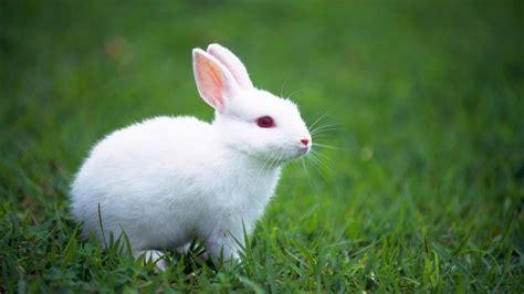 wallpaper cute rabbit cute bunny wallpapers wallpaper cave