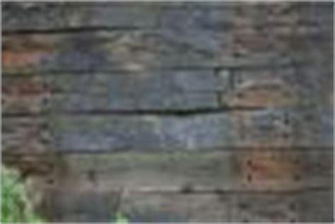 blumenkübel terrasse garten bilder blumen pflanzen rasen fotos bauunternehmen