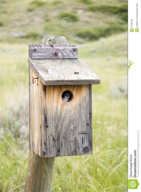 bird in the house bird in bird house stock photo image of summer bird 2742578