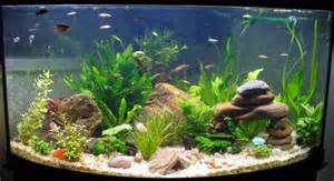 aquarium dekoration aquarium decoration aquarium fish fish