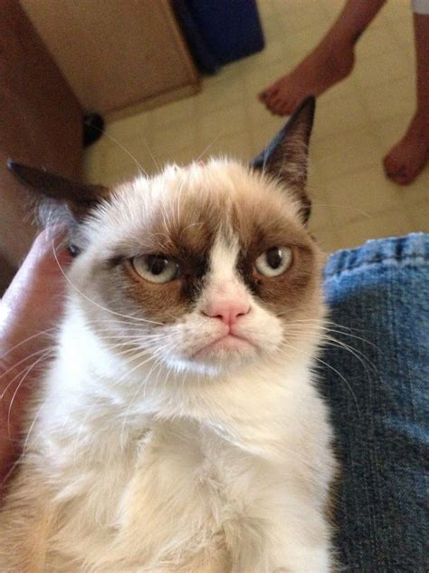 Original Grumpy Cat Meme - how grumpy cat won the internet and its owners profited