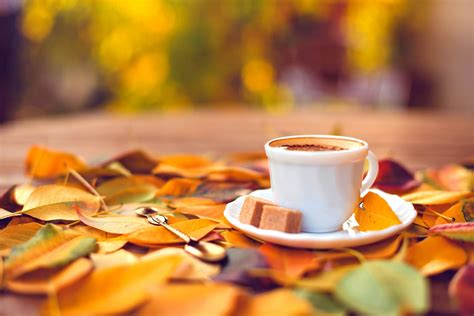 sweet coffee   autumn carpet hd wallpaper