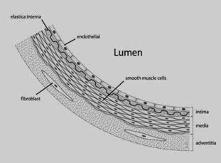 Rahasia Kedokteran media informasi kesehatan dan kedokteran rahasia sel endotel