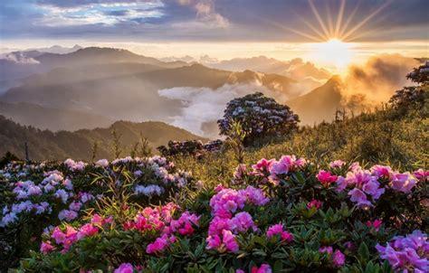imagenes de flores espirituales обои цветы утро горы картинки на рабочий стол раздел