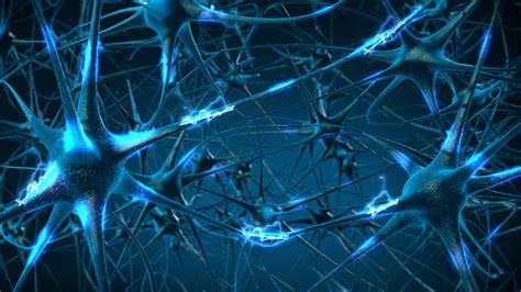 imagenes en 3d que es el primer mapa en 3d de la red neuronal del cerebro revela