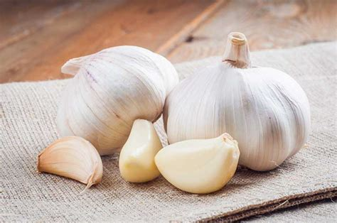 is garlic poisonous to dogs can dogs eat garlic the answer might you