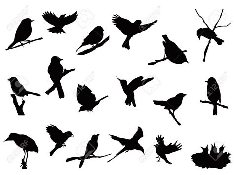finch clipart bird silhouette pencil and in color finch