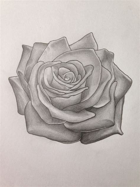 shaded rose tattoo experimental design done by myself