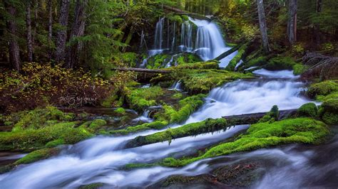 wallpaper river water rocks trees fast mountain river waterfall pine forest fallen trees
