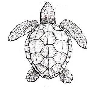 turtle drawings designs wesharepics