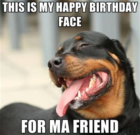 Puppy Birthday Meme - 20 funny happy birthday memes sayingimages com
