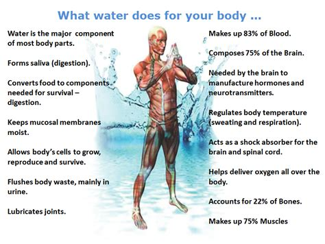 what does water mean drinking water facts