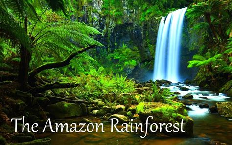 amazon rainforest wallpaper wallpapertag