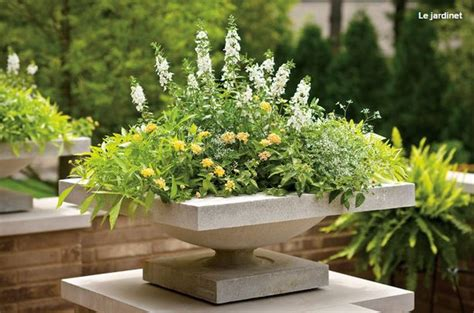12 Plant Combinations For Stylish Summer Planters   Garden