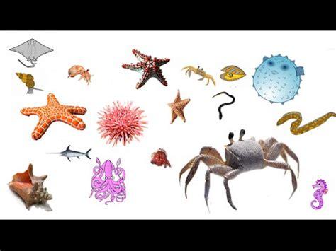 imagenes de animales que viven en el mar los animales del fondo del mar para ni 241 os youtube