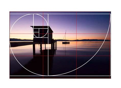 golden section photography 412 best images about mathematics fibonacci sequence and