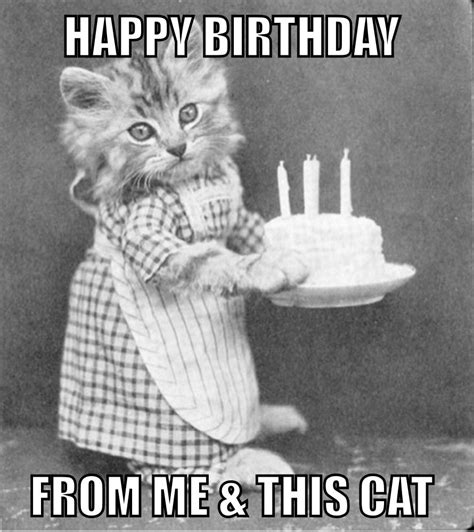 Funny Meme Ideas - funny cat birthday card image compartirvideos