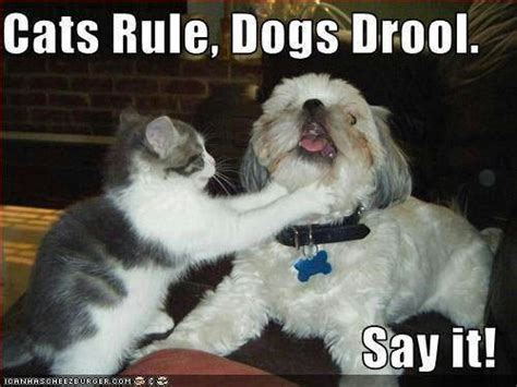 dogs and cats rule cats rule dogs drool bad