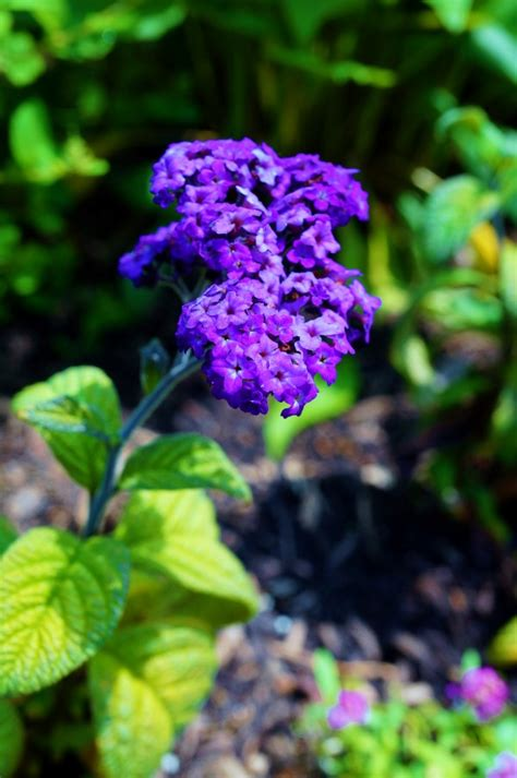 fragrant plants list grow these 10 fragrant flowers for a heavenly smelling