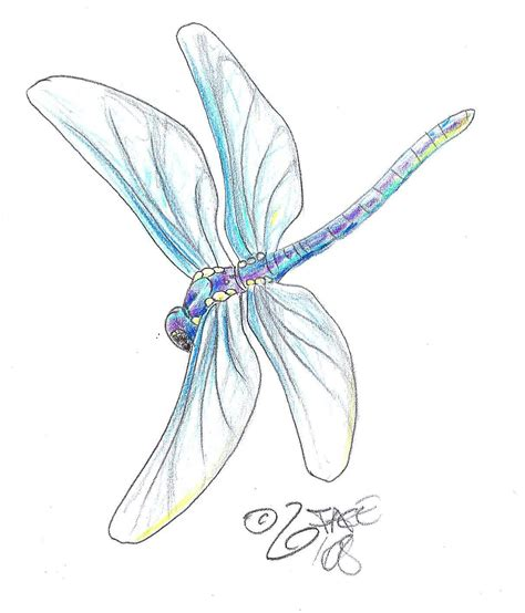 fly tattoo designs dragonfly designs the is a canvas