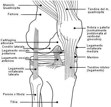 dolore interno al ginocchio il ginocchio