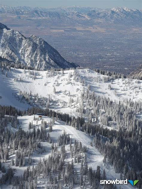 Snowbird Ticket Office by Snowbird Opens Tomorrow Unofficial Networks
