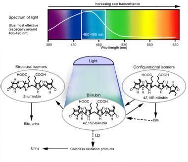 neonatal jaundice light therapy phototherapy for jaundice background indications