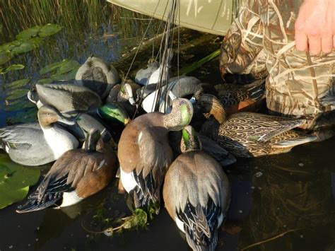 duck hunters boat capsized decoys save duck hunters from drowning