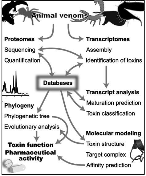 Toxins Free Full Text Bioinformatics Aided Venomics Html