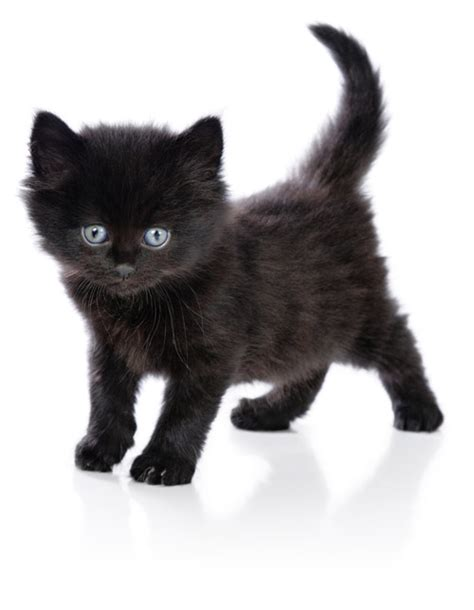 can you train a cat to go outside for bathroom cat facts 67 facts about cats factslides