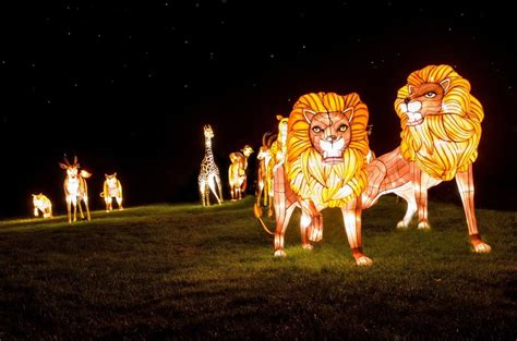image gallery light show at longleat