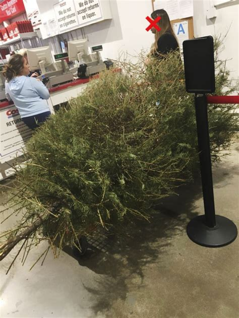costco christmas trees live returns a tree on january 4th because it s dead and the shop s response will