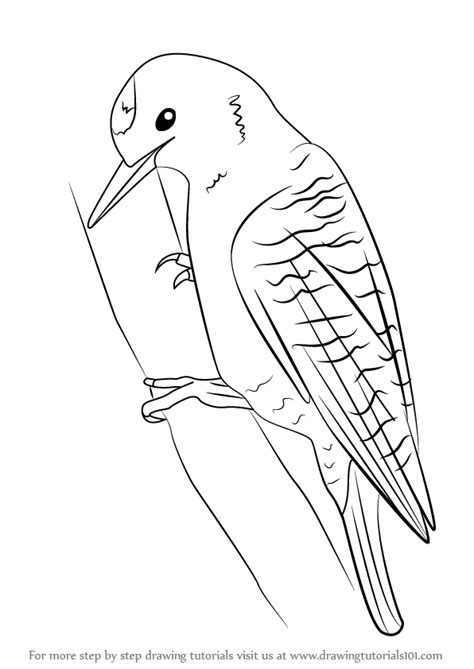 How To Draw A Woodpecker Step By Step learn how to draw a woodpecker woodpeckers step by step