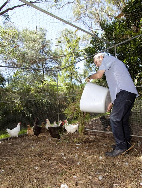 backyard chooks don s tips backyard farm chooks burke s backyard