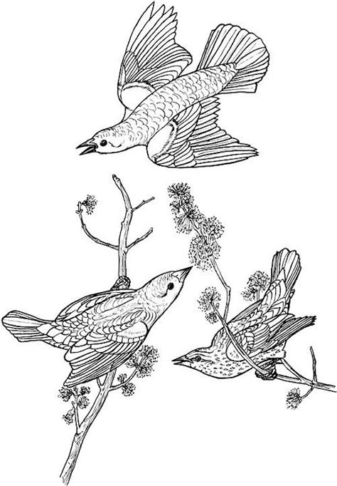 coloring pages adults birds bird coloring page