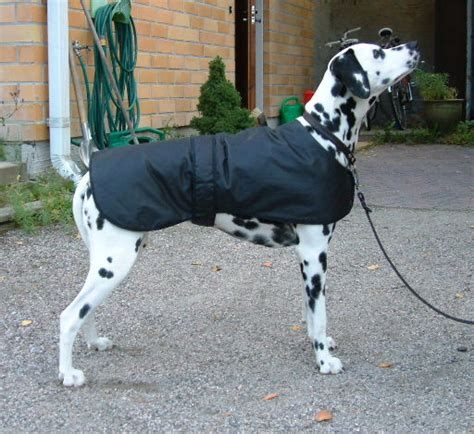 pattern for a large dog coat large dog coat patterns gallery