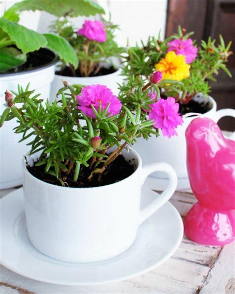 tea cup planter 9 tea cup gardens a cultivated nest