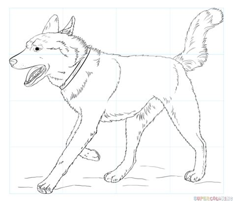 how to a husky siberian husky drawing