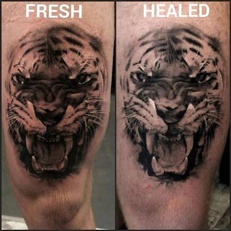 black and grey tattoo fresh vs healed here is a fresh vs healed pic of a tiger i tattooed a few