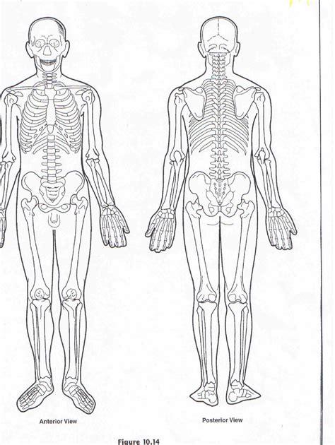 human diagram for printable blank human anatomy diagrams printable blank
