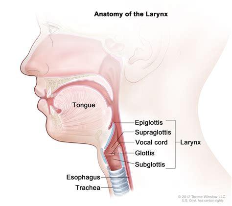 laryngectomy diagram laryngeal cancer treatment pdq 174