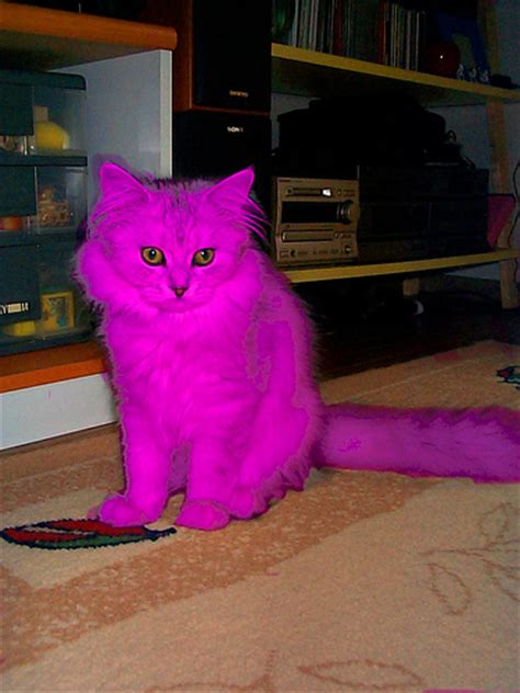 Cat Pink pink cat flickr photo