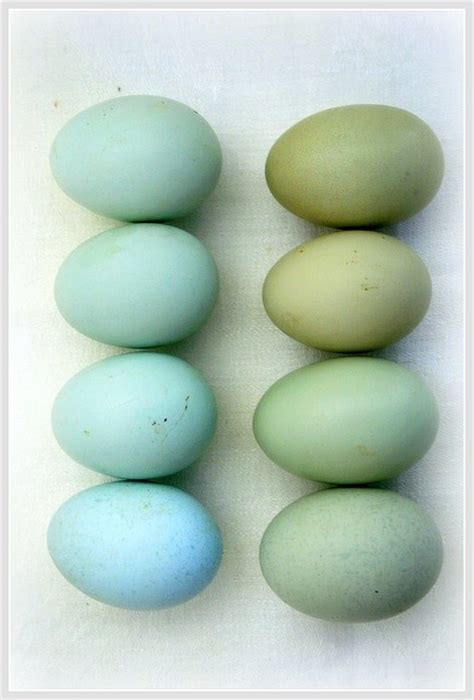 can you color brown eggs 2014 july