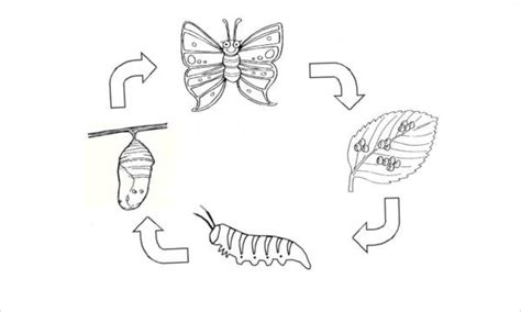 butterfly metamorphosis coloring pages color the life cycle moth butterfly metamorphosis