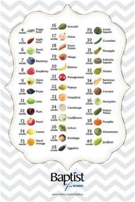 fruit 16 weeks baby size by week fruit comparison 16 week fetus size